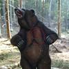 Braunbär (WA-Gr. 1)
