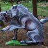 Wölfe raufend (WA-Gr. 2)