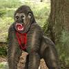 Gorilla WA-Gr.-1