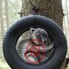 Waschbär im Reifen WA-Gr.-3