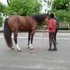 Das Kind bereitet sich vor, um das Pferd seitwärts zu schicken