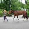 Halte den Fokus, so folgt das Pferd automatisch. Sehr schön vorgelebt von diesem Pferde-Kind-Paar