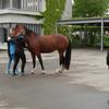 Wenn das Pferd nicht hören will, muss man eben ein wenig mithelfen..