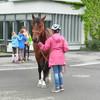 Ein Kind schickt das Pferd rückwärts. Gleichzeitig üben die Kinder im Hintergrund das Basiswissen über Pferdebewegung.