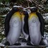 Pinguine (WA-Gr. 4)