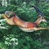 Antilope (WA-Gr.:2)