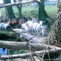 Bei diesen wasserscheuen Tieren lernt man das Brücken bauen