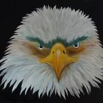 Nr. 33, Weißkopfseeadler von Vorne, Größe 50 x 60 cm