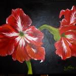 Nr. 11, Amaryllis, Größe 30 x 40 cm