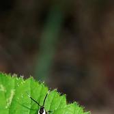 Faulholz Motte