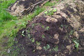 Ein Kompostbeet entsteht