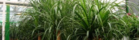 Pflanzen von Le Orchid