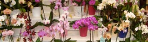 Orchideen von Le Orchid